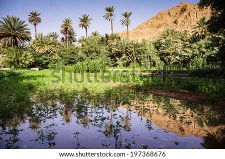 Oasis in Todra Gorge, Morocco, Africa - stock photo