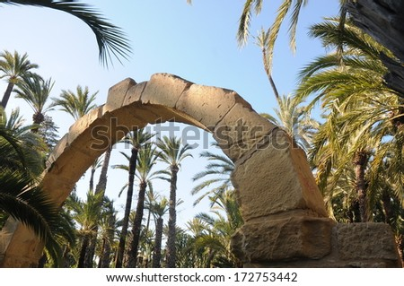 oasis palm tree morrocco  - stock photo