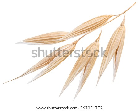 Oat plant isolated on a white background. File contains clipping paths. - stock photo