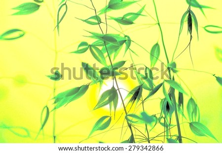Oat twigs with colored effects and lighting at dawn - stock photo