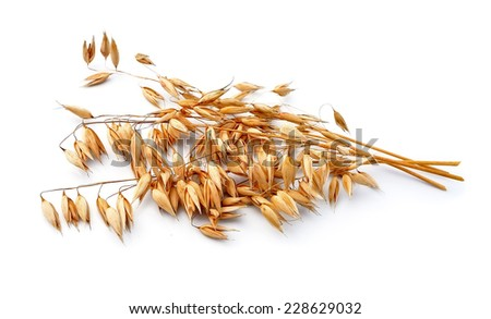 Oats isolated on white close up . - stock photo