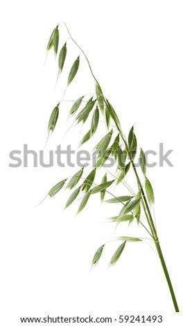 Oats on white background. Isolated - stock photo