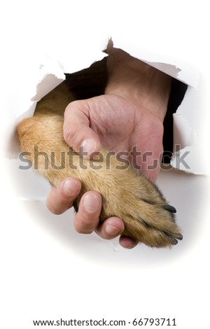 object on white - dog and man hand close up