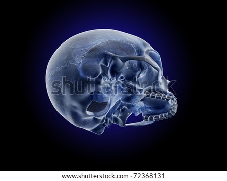Oblique, Lateral View of the Skull - stock photo