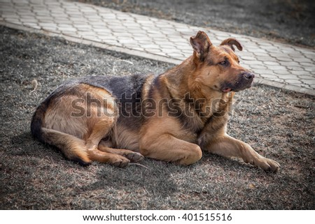 observant dog sitting on the grass and looks aside - stock photo