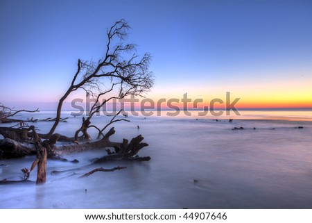 ocean and fallen trees at twilight, hdr image - stock photo