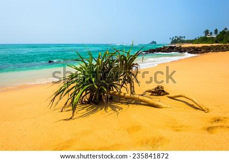 Ocean coast of Sri Lanka in the tropics - stock photo