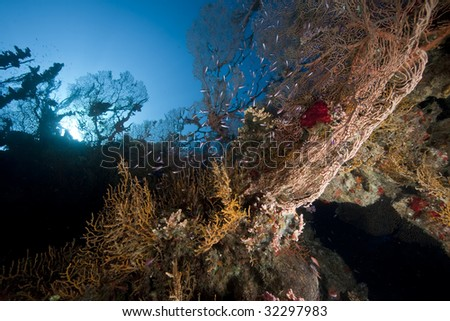 ocean, coral and seafan