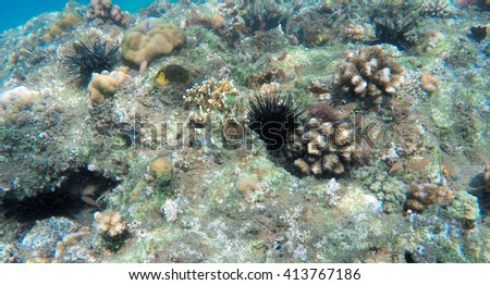 Ocean landscape, coral reef animals, fresh corals at the bottom of the sea, sea danger, dangerous animal, needle animal, colorful corals, yellow corals, green corals, sea landscape of Philippines - stock photo