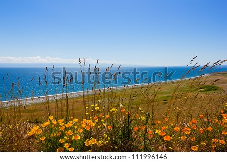 Ocean landscape with yellow flowers, San Juan islands in Washington state - stock photo