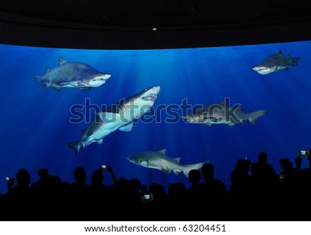ocean-park - stock photo