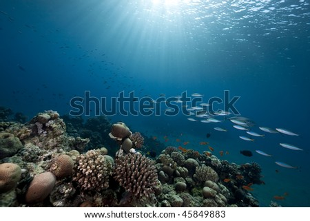 Ocean, reef and fish - stock photo