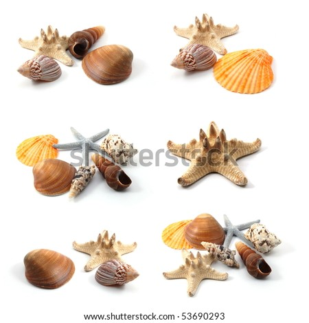 ocean seashells collection isolated on white background - stock photo
