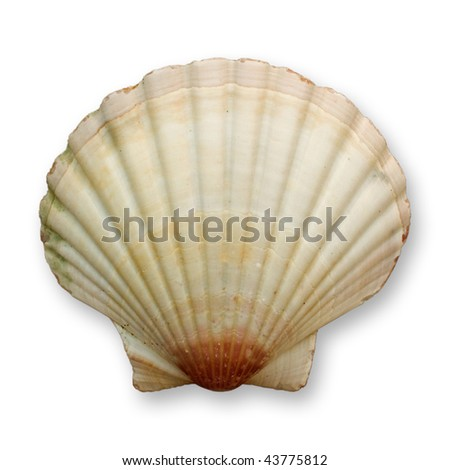 Ocean shell isolated on white background, clipping path included - stock photo