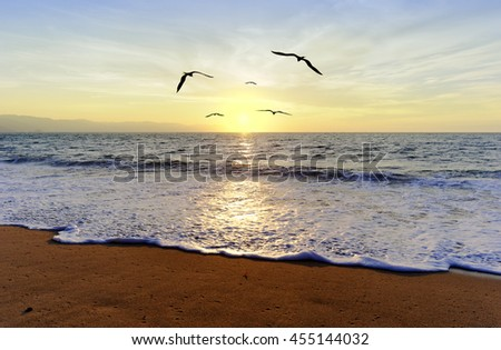 Ocean sunset birds is a group of birds in flight and a journey towards freedom and the light.