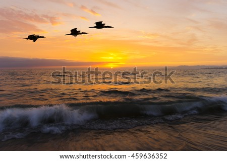 Ocean sunset birds is three large seabirds caught in mid flight flying against a vivid and colorful ocean sunset as a gentle wave rolls to shore.