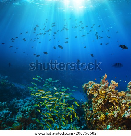 Ocean underwater coral reef in open deep sea