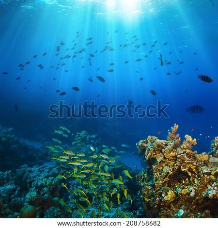 Ocean underwater coral reef in open deep sea - stock photo