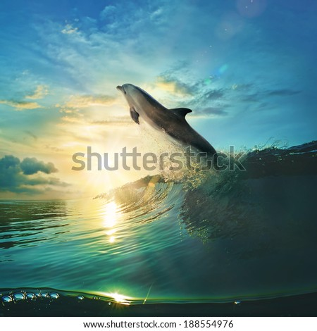 Ocean-view design postcard. Beautiful colorful breaking surfing ocean wave rushing at sunset time and playful dolphin leaping from water with splashes  - stock photo