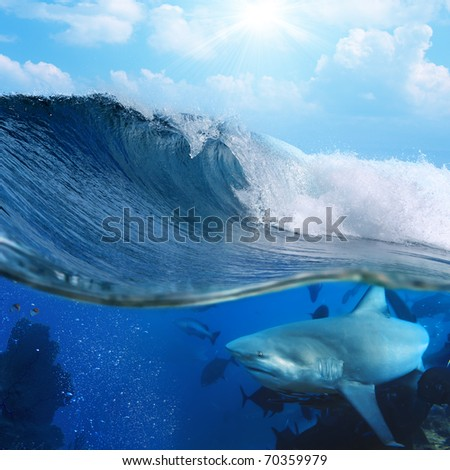 Ocean-view splitted two parts First with few bull-sharks in blue underwater Second with sunlight and cloudy sky splashed breaking surfing wave