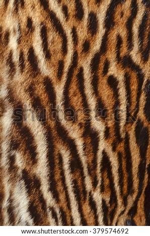 ocelot fur background - stock photo