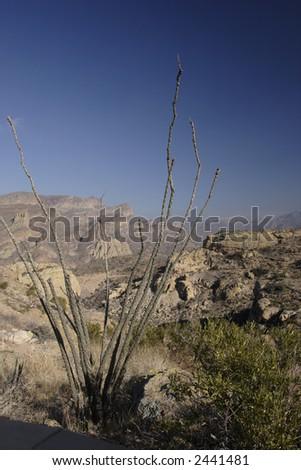 Ocotillo Cactus above Apache Trail; Arizona in Winter. - stock photo