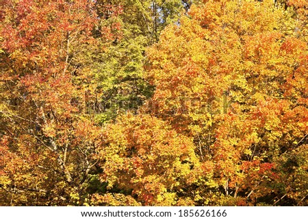 October in Cuyahoga Valley National Park in Ohio. - stock photo