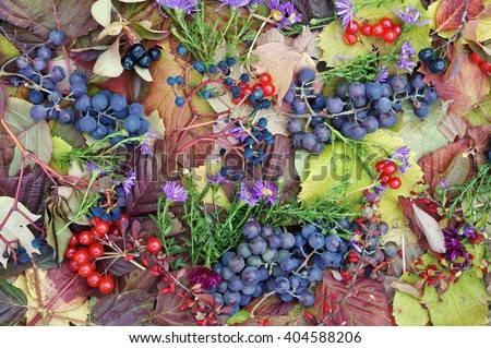 October plants background - grapes, a barberry, a guelder-rose, chrysanthemums and so on - stock photo
