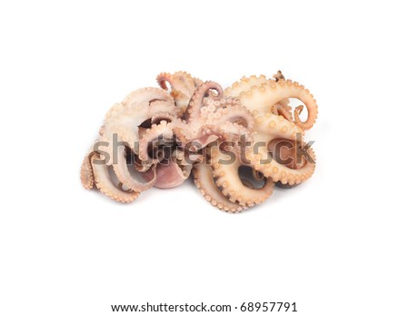 Octopus isolated on a white background - stock photo