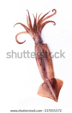 Octopus on white. - stock photo