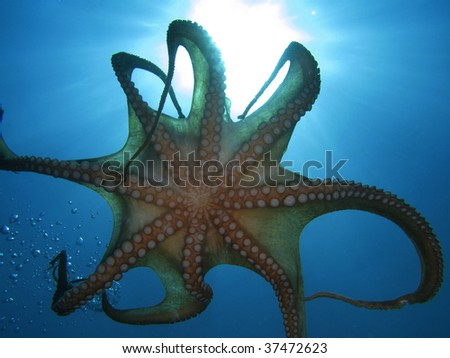 Octopus Tentacles and sun rays. - stock photo