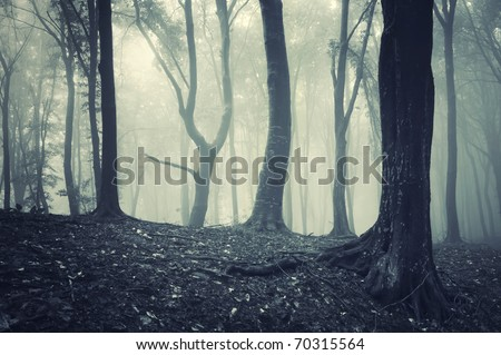odd looking tree in light in a foggy mysterious forest - stock photo
