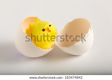 of chicken eggs on white background - stock photo