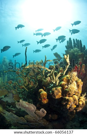 Off the coast of Roatan Honduras underwater coral reefs are bathed in sun - stock photo