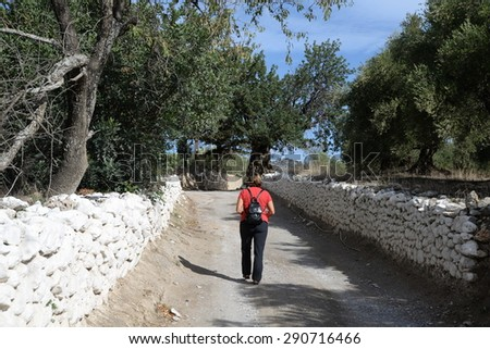 Off-track and olive tree at Crete