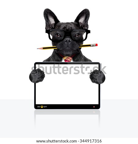 office businessman french bulldog dog with pen or pencil in mouth  , behind laptop pc tablet screen ,  isolated on white background - stock photo