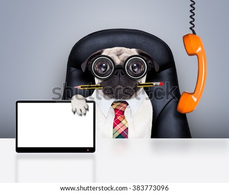 office businessman pug dog with pen or pencil in mouth  , behind laptop pc tablet screen computer,  sitting on a leather chair - stock photo