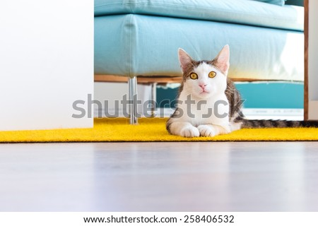 Office cat sitting on yellow carpet between pieces of office furniture. Lifestyle image of a pet kitten in office environment. Concept of relaxation at work - stock photo