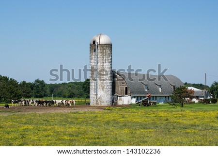 Ohio Dairy Farm:  A herd of dairy cows stands next to an old barn and silo complex on an Ohio dairy farm - stock photo