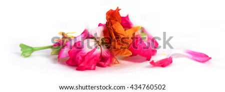 oil draw geranium, petunia, dry delicate flowers, leaves and petals of pressed, iris, rose, marigolds, Aquilegia pelargonium, isolated on white paint background scrapbook - stock photo