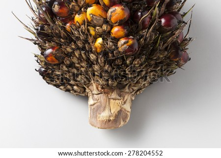 Oil palm bunch on background,close up