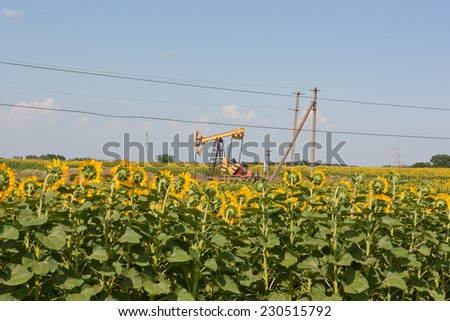 Oil pump jack operating in sunflower field - stock photo