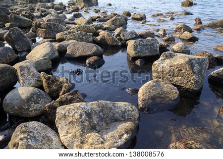 Oil spill on the sea shore, ecological disaster - stock photo