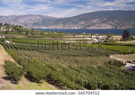 Okanagan Lake and vineyards by Penticton, British Columbia, Canada