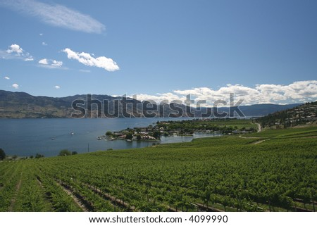 Okanagan Vineyards - stock photo