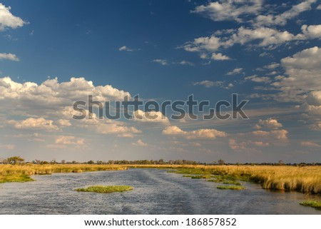 Okavango Delta (Moremi National Park) in Botswana Africa - stock photo
