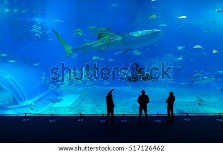 OKINAWA,JAPAN, 9, Nov,2016 silhouettes three man excited with giant whale shark of underwater in okinawa Aquarium
