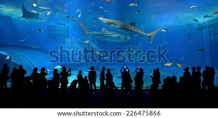 OKINAWA, JAPAN - OCTOBER 24 : Whale shark in Okinawa Churaumi Aquarium taken October 24, 2013 in Okinawa. This Aquarium is the biggest of Japan aquarium. - stock photo