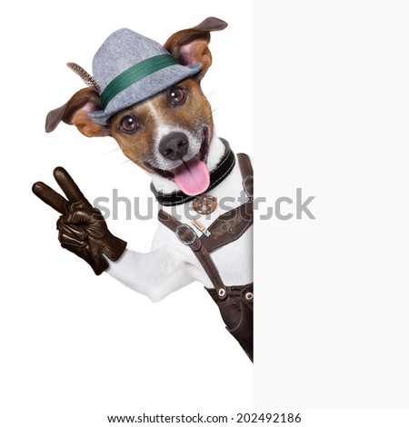 oktoberfest dog  smiling happy  with peace or victory fingers besides white blank banner or placard - stock photo