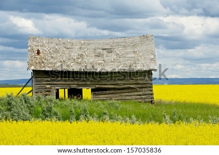 Old abandoned barn in canola field rain clouds in background - stock photo